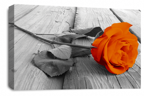 Rose Flower Canvas Wall Art Orange Grey White Floral Picture Print